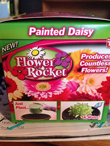 FLOWER ROCKET PAINTED DAISY AS SEEN ON TV OVER 1,000 SEEDS