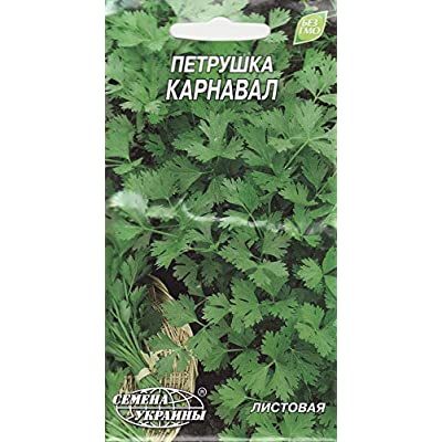 Parsley Seeds Carnival Russian Herb Seed : Garden & Outdoor