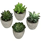 Set of 4 Faux Assorted Succulent Plants in Recycled Pulp Molded Cylindrical Planter Pots