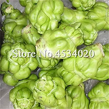 Acheter Brassica Juncea Légumes Graines Plante Légumes-racines moutarde bourgeons