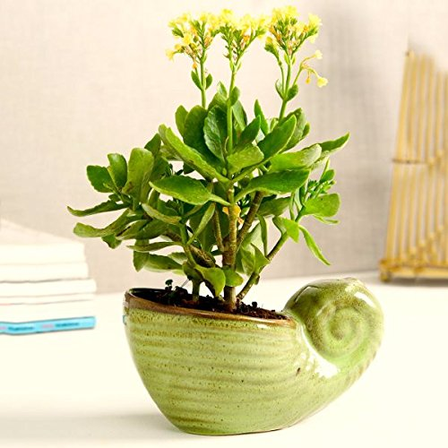 Ceramic Snail Green Planter - Plant Pot