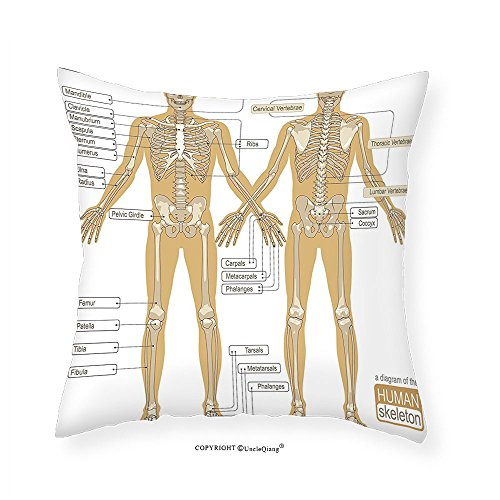 VROSELV Custom Cotton Linen Pillowcase Human Anatomy Diagram of Human Skeleton System with Titled Main Parts of Body Joints Picture for Bedroom Living Room Dorm White Tan - Parts The Diagram Of Ear