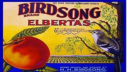 Amazon com: Birdsong Thomaston Upson Georgia Peaches Bird