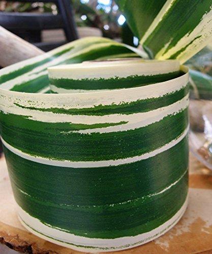 Green Ti Leaves (PoshNPretty 2
