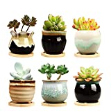 Brajttt 2.5 Inch Ceramic Succulent Planter Pot with