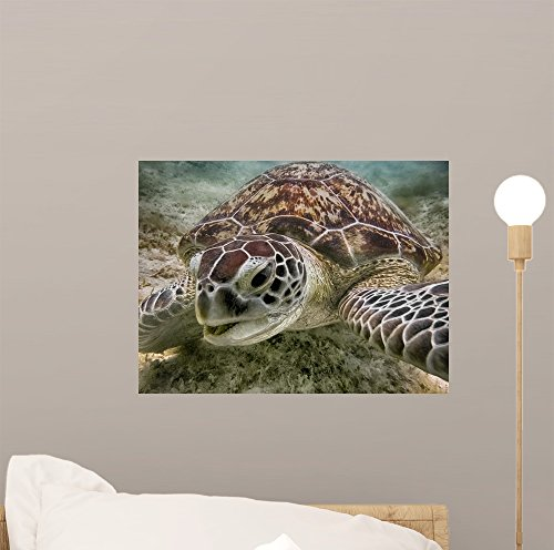 Green Sea Turtle Wall Mural by Wallmonkeys Peel and Stick Graphic (12 in W x 9 in H) (Maui Fin)
