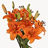 Asiatic Lilies (70 Orange)