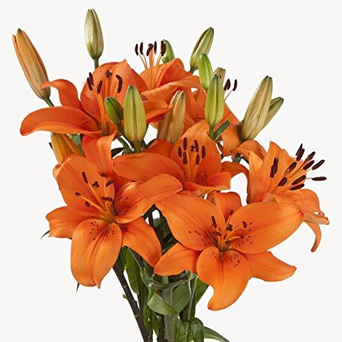 Asiatic Lilies (70 Orange) by eFlowy