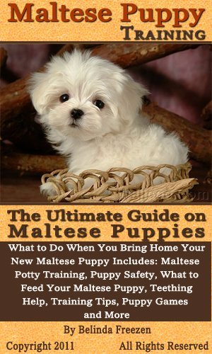 Maltese Puppy Training The Ultimate Guide On Maltese Puppies What