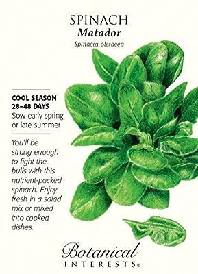 Matador Spinach Seeds - 3 grams