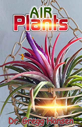 AIR PLANTS: All you need to know about Growing Tillandsias and the Amazing Benefits of Air Plants