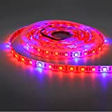buy 5050 Super Bright Aquarium Coral LED Strip Light 5M 300LEDs Spool Waterproof LED Plant Grow String Lights DC 12V Blue + Red Color String light (5Red 1Blue) now, new 2019-2018 bestseller, review and Photo, best price $14.99
