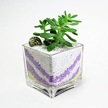 Amazon 12pc Clear Square Glass Vase Cube 5 Inch 5 X 5 X 5