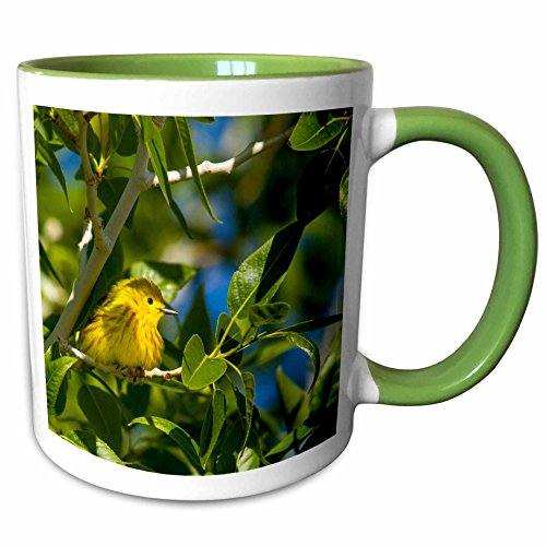 3dRose Danita Delimont - Chuck Haney - Birds - Yellow Warbler in tree near Augusta, Montana, USA - 15oz Two-Tone Green Mug (mug_189979_12)