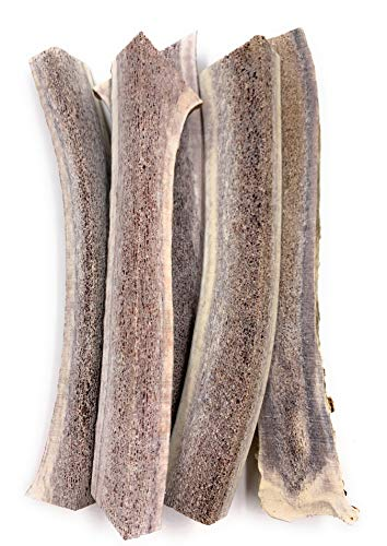 Elk Antlers for Dogs