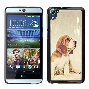 TopCaseStore / la caja del caucho duro de la cubierta de protección de la piel - Beagle Foxhound Puppy Baby Dog - HTC Desire D826
