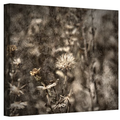 Art Wall Dormant Wrapped Canvas Art by Mark Ross, 24 by 32-Inch