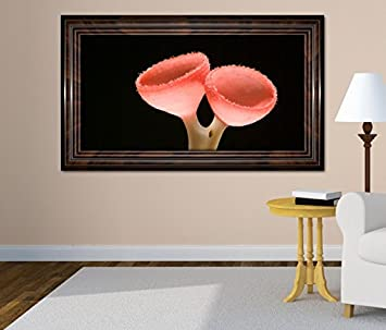 3D Wandtattoo Abstrakter Pilz Auf Braunen Ast Bild Selbstklebend Wandbild  Sticker Wohnzimmer Wand Aufkleber 11H1055,