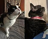 EXPAWLORER Breakaway Cat Collar Set with Bell