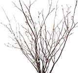 Tin Roof Treasure Natural New England Birch Branches 1-2 ft. Pack of 60