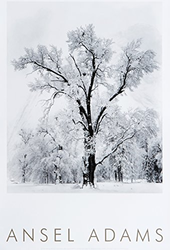 Oak Tree, Snowstorm, Yosemite National Park, Cailfornia 1948 by Ansel Adams Publishing Rights Trust (1997-04-01) (Yosemite Tree National Snowstorm Park)