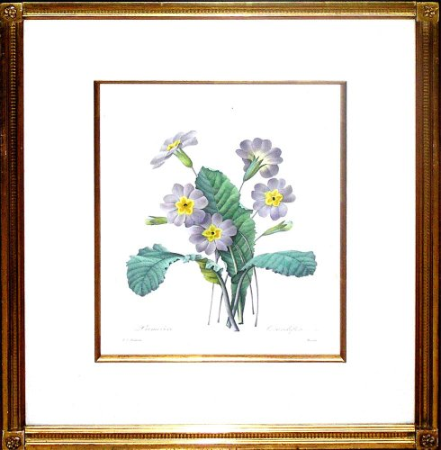 Primevere (Primrose) - Pretty winter floral wall decoratons