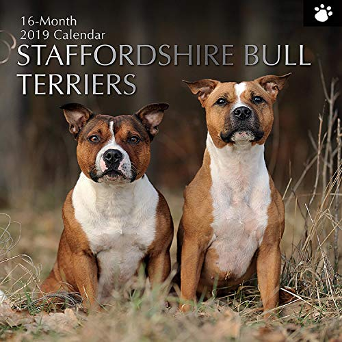 2019 Wall Calendar - Staffordshire Bull Terrier Calendar, 12 x 12 Inch Monthly View, 16-Month, Dogs and Pets Theme, Includes 180 Reminder Stickers ()