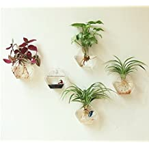 Mkono 2 Pack Clear Glass Plant Terrarium Wall Mount Hanging Planters Plant Flower Vase -- Hexagon Shape M