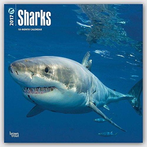 Sharks - Haie 2017 - 18-Monatskalender: Original BrownTrout-Kalender [Mehrsprachig] [Kalender] (Wall-Kalender)