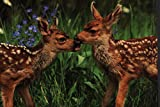 Healthy Planet Twin Mule Deer Fawns Wildlife Photograph Card Blank