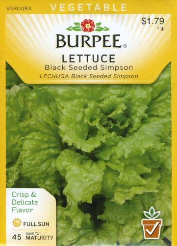 Lettuce Seed Burpee (Burpee 66266 Lettuce, Leaf Black-Seeded Simpson Seed Packet)