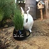 Organic Cat Grass Growing kit with Organic Seed