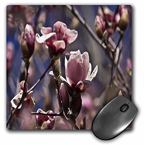 Park Saucer - 3dRose Lee Hiller Photography Hot Springs National Park Flowers - Saucer Magnolias - MousePad (mp_42983_1)