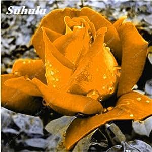 Nuevas semillas 2017! 24 colores de semillas de Rose de plantas Semillas de flores en maceta Rose perenne del patio y balcón al aire libre Plant-150 PC 18