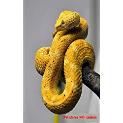 Pet stores with snakes (1)
