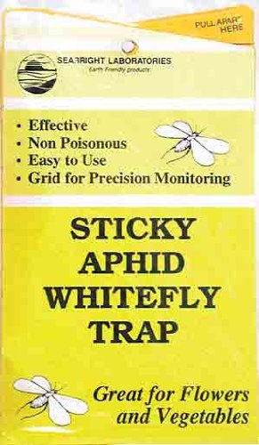 insect-traps-aphid-whitefly-traps