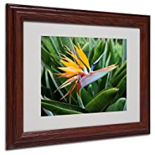 Trademark Fine Art Bird of Paradise by Pierre Leclerc Canvas Wall Artwork, Wood Frame, 11 by 14-Inch