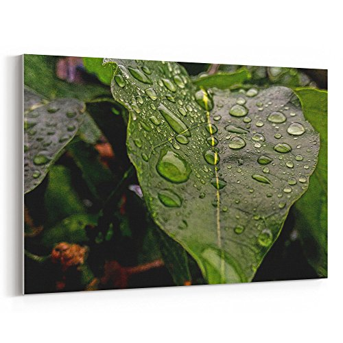 (Westlake Art - Leaf Photography - 12x18 Canvas Print Wall Art - Canvas Stretched Gallery Wrap Modern Picture Photography Artwork - Ready to Hang 12x18 Inch (D41D8))