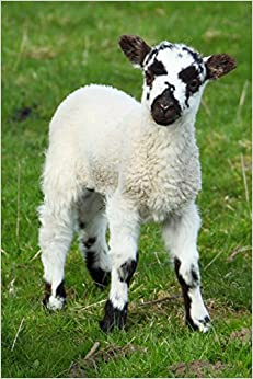 Little Lamb with a Black and White Face Journal: 150 Page Lined Notebook/Diary