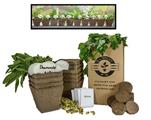 - Mr. Sprout & Co Large Herb Kit: 10 Seed Varieties - Medicinal and Culinary Herb Garden Kit - Basil, Parsley, Cilantro, Mint, Chives, Sage, Thyme, Catnip, Chamomile, and Echinacea