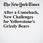 After a Comeback, New Challenges for Yellowstone's Grizzly Bears | Jim Robbins