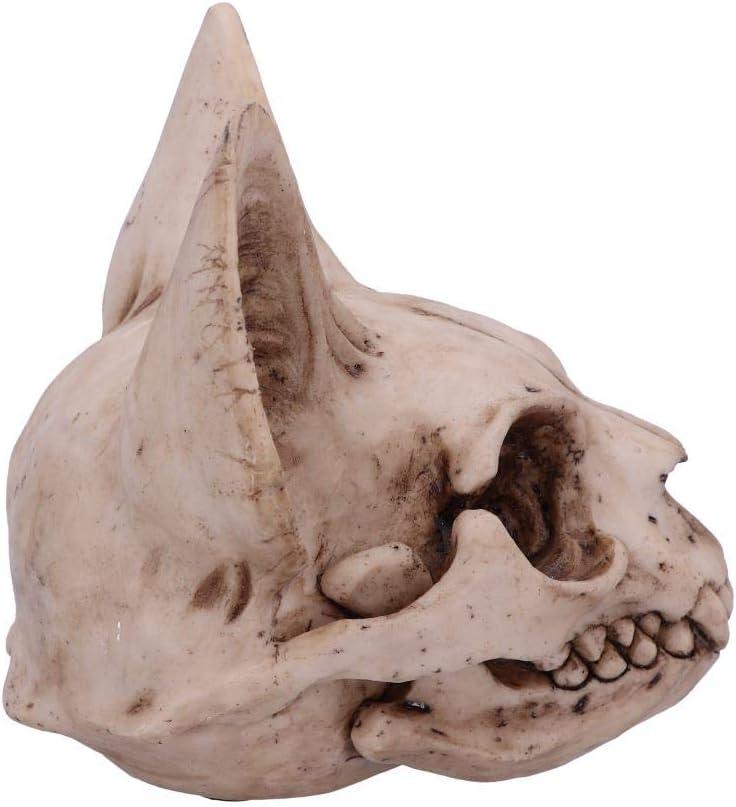 Nemesis Now Bastets Secret Cat Figurine en Forme de cr/âne de Chat Couleur Naturelle Taille Unique