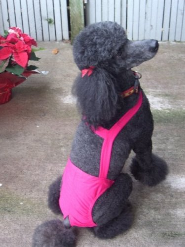 Joybies Hot Pink Piddle Pants(tm) for XX Large Female Dog (23 -26  From Collar to Base of Tail)