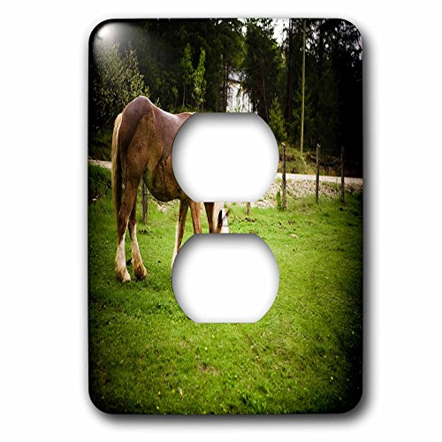 - 3dRose TDSwhite - Horse Equine Photos - Draft Horse Grazing After Bath - Light Switch Covers - 2 plug outlet cover (lsp_285476_6)