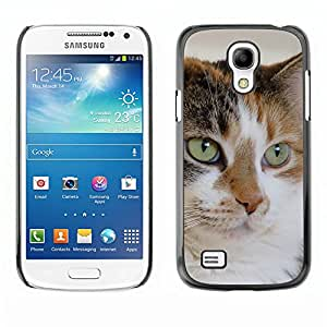 Vortex Accessory Carcasa Protectora Para SAMSUNG GALAXY S4 MINI i9190 (MINI VERSION) - Mutt Mongrel Cat House Cat Mixed -