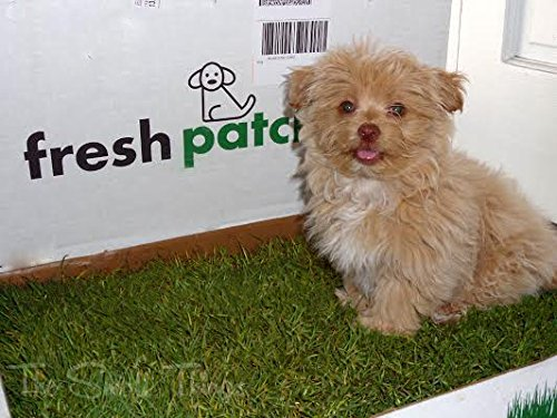 Fresh Patch Disposable Dog Potty With Real Grass As Seen