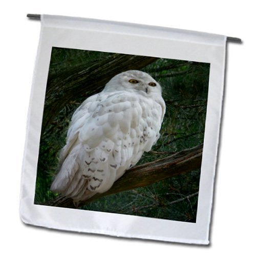 Visual Edges Nature - Snow white owl perched on a branch against a green background - 18 x 27 inch Garden Flag (fl_154800_2)