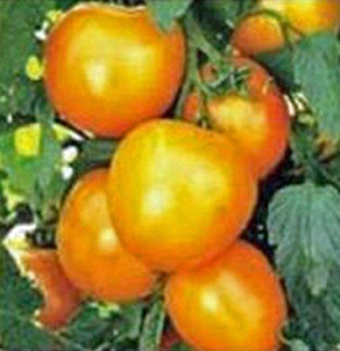 TOMATO, JUBILEE, HEIRLOOM, ORGANIC 25+ SEEDS, DELICIOUSLY SWEET YELLOW FRUIT