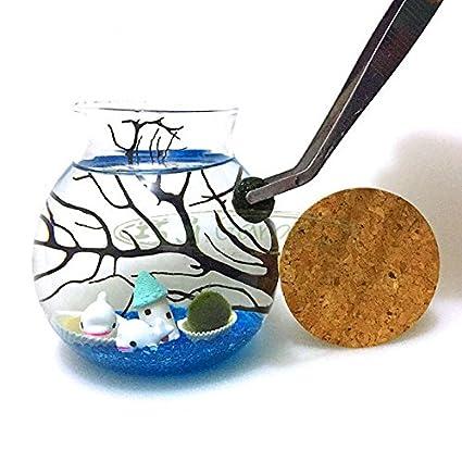 Marimo del newdreamworld Acuario Kit con 11 cm de cristal redondo Pot/vida acuático bola