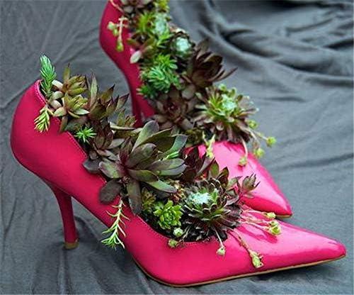 Bloom Green Co. 200pcs Rare min Cactus Plantas suculentas ...
